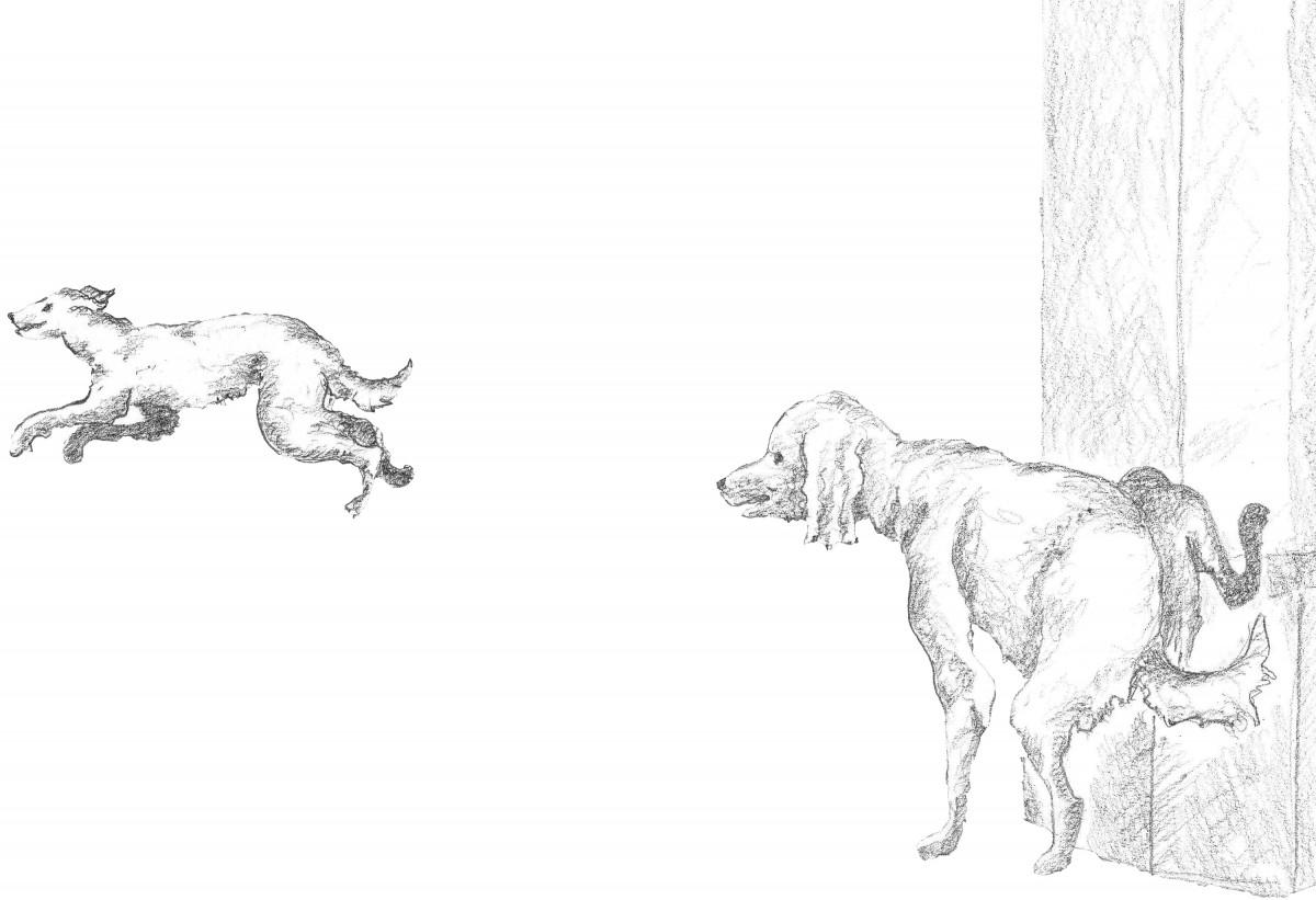 Hund Haxl