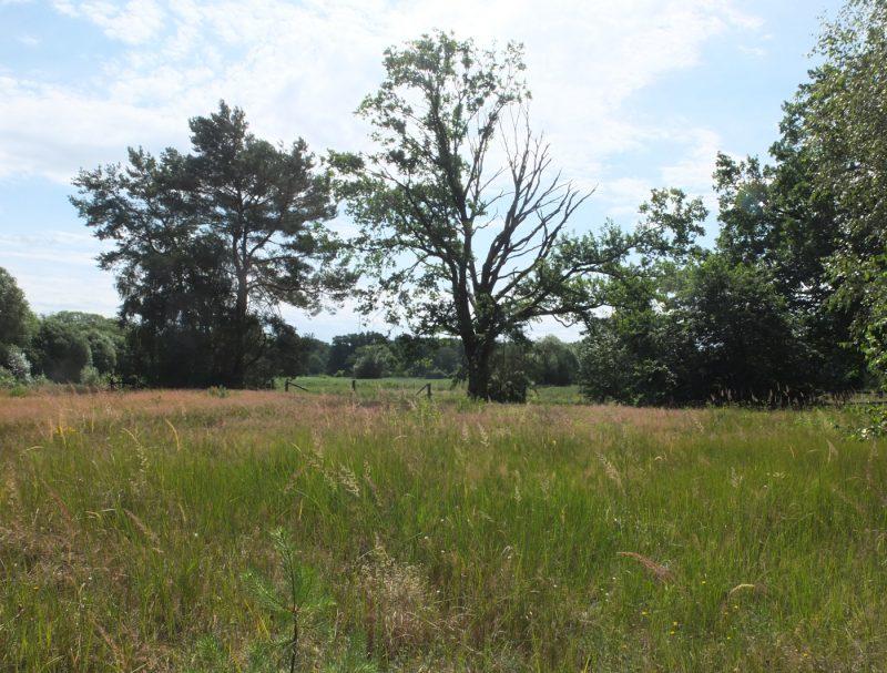 LandschaftVorLoewenberg